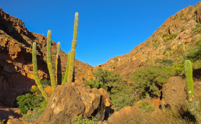 Typical landscape around La Paz Bay - volcanic rock, scrubby vegetation and cacti