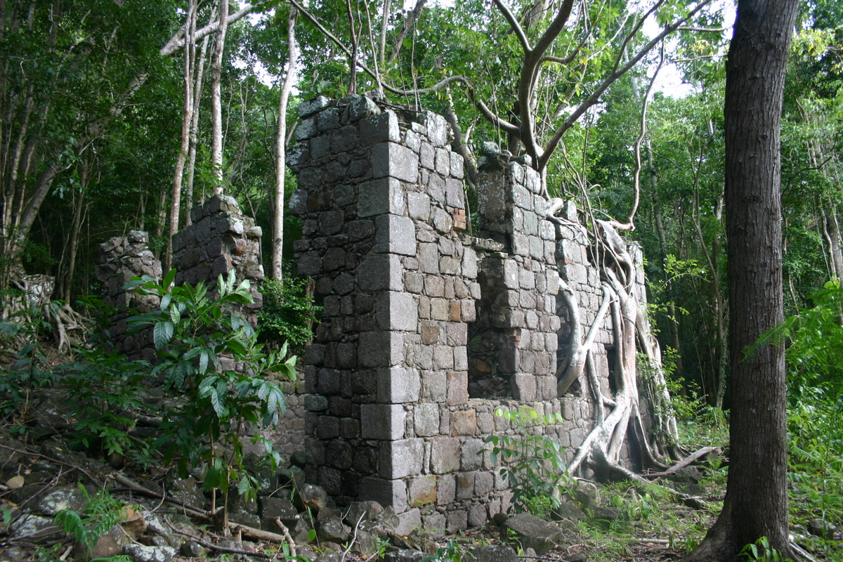 forest ruins dominica